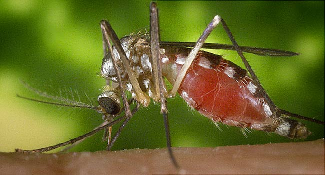 mosquito control company in Highlands Ranch